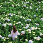 Cẩm nang các loài hoa đẹp ở Đà Lạt
