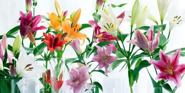 Cách Cắm Hoa Ly Bình Cao