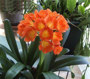 Hoa trồng trong nhà không cần ánh sáng