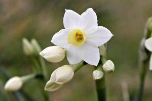 Những loài hoa mang ý nghĩa tượng trưng cho sự cô đơn