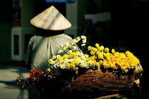 Hoa Cúc Nở Vào Mùa Nào?